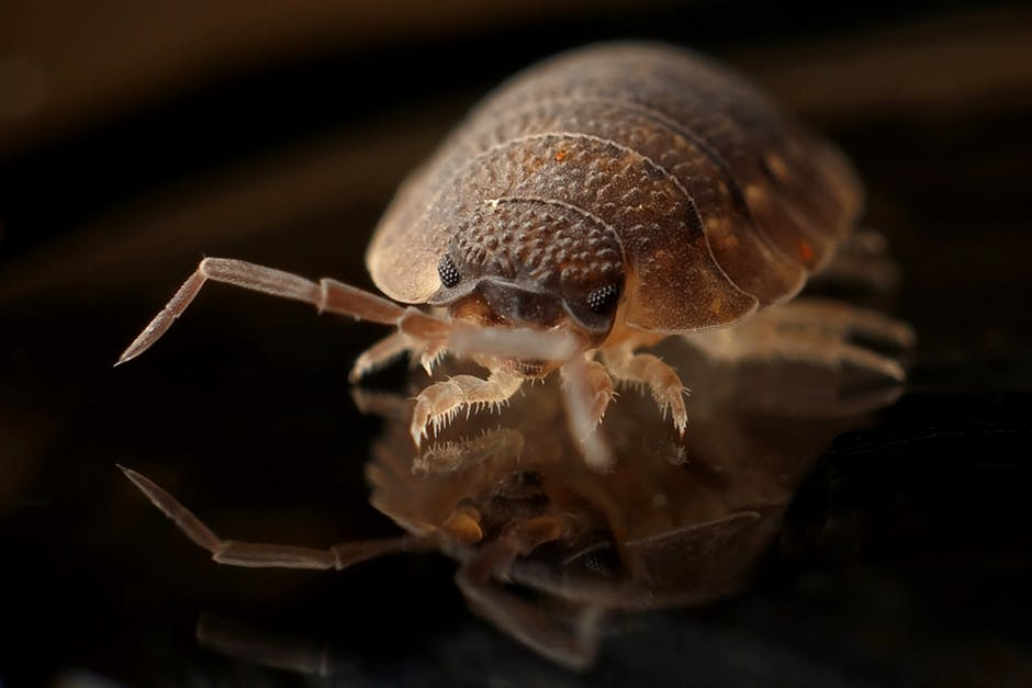 Bed Bug Pest Control Services In Hyderabad